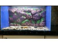 fishtank with 3d background