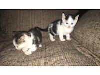 Kittens ready for forever homes please