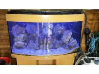 Marine fish tank juwel vision/pending collection