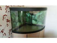 Fluval Complete Fish Tank