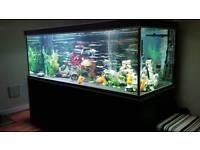 Large 6ft fish tank