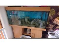 Juwel rio 400. Tank with external filter bubbles machine and heater, £300 contact me 07539871813
