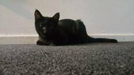 Millie - 16 month old
