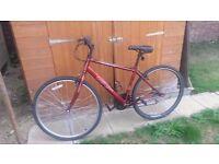 Ladies Apollo Cx.10 Hybrid Cycle