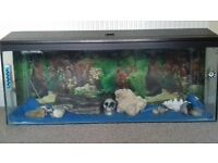 fish tank......