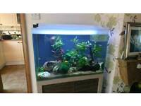 Fluval m60 fish tank
