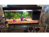 Fish tank eveything includes