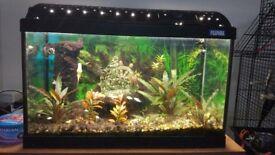 Fluval 60l fish tank