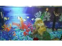 Elite aquarium 35L