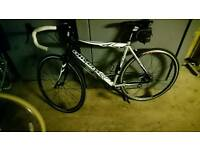 Olivero racing bike