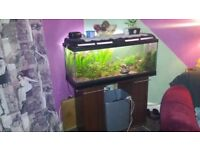 Fish tank for sale 180L