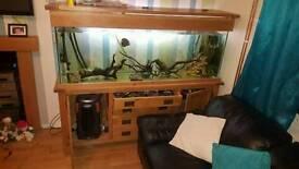 160cm fishtank