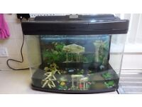 TWO 60L FISH TANKS ACCESSORIES AND CONTENTS.