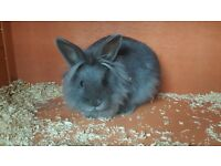 8 week old rabbit with brand new hutch and extras