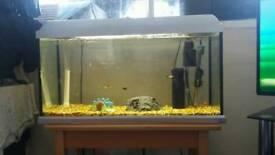 Fish tank plus more