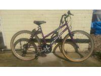 Apollo Tesqua Ladies Mountain Bike Free Delivery