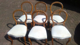 Antique walnut dining chairs 6 of