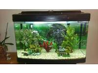 fish tank bow front complete set up