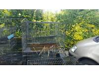 XXL DOG CAGES