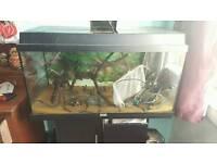 110l fish tank