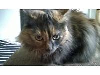 Cat Sitting, Dog Walking and Pet Care available- Total Recall Glasgow Southside