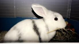 Rabbit and indoor cage and essentials