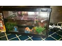 Tropical Fish tank with fish.