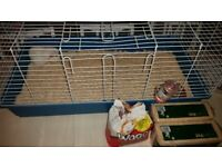 Guinea pig, hutch, food and bedding