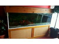 6ftx2ftx2ft Tropical fish tank