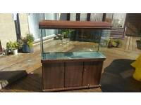 FISH TANK 4ft with stand