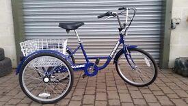 PROBIKE ADULT TRIKE 6 speed 3 wheel wheeler tricycle cargo disability bike