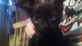 Lovely black kittens for sale. £70 negotiable