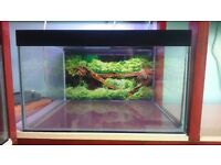 for sale, fish tank