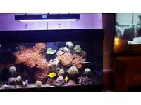 LED Adjustable Aquarium Light Full Spectrum Reef Marine Coral Lamp