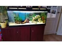Aquarium 160L + Ex filter