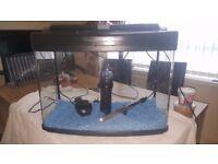 tropical fish tank 64L