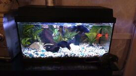54 litre Juwel Korallux Aquarium