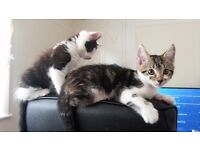 Three lovely brothers searching for a new home