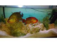 fish tank L120/W50/H60