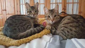 MISSING Cat - Kilmaurs / Kilmarnock - Please help