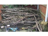 Tree stumps/logs/tree branches free free