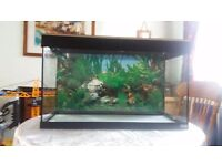 Fluval Roma Fish Tank. Bargain price.