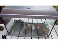 aqurium tank fish