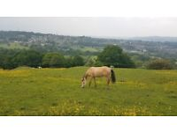 Grazing land wanted