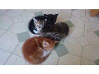 4 very cute kittens forsale