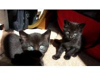Kittens - 5 weeks old looking for loving homes