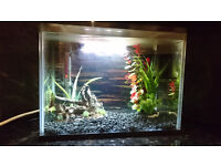 19L Tropical Fish Tank Setup - Heater/Filter/Light - Great Condition!