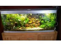 Aquarium 450l