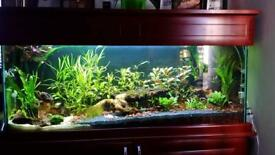 4ft fish tank with cabinet 200L