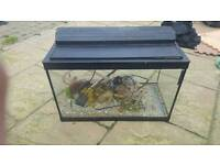 Clearance - Reptile or fish tank